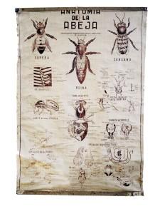 Anatomia Abeja